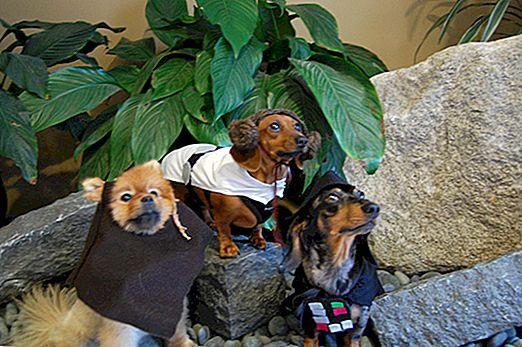 कैसे करें - कुत्तों के लिए स्टार वार्स हेलोवीन वेशभूषा बनाएं